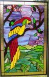 фото попугай тиффани